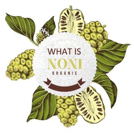 noni juice and health benefits
